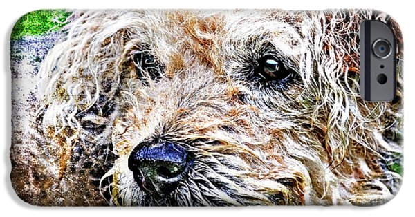 Puppies iPhone Cases - The Scruffiest Dog In The World iPhone Case by Meirion Matthias