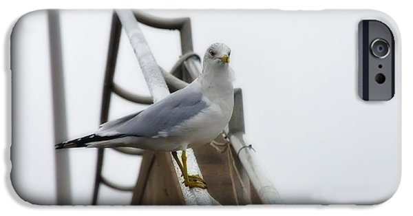 Seagull iPhone Cases - The Seagull iPhone Case by Bill Cannon