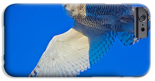 Nebraska iPhone Cases - The Snowy Owl iPhone Case by Chris  Allington