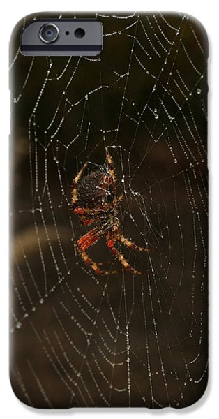 Spider iPhone Cases - The Spider 2 iPhone Case by Ernie Echols
