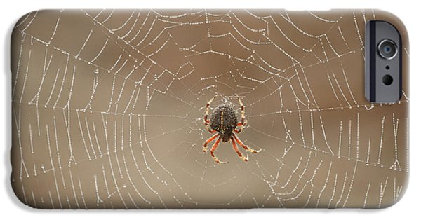 Spider iPhone Cases - The Spider iPhone Case by Ernie Echols