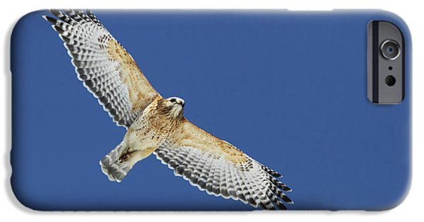 Spirit Hawk iPhone Cases - The spirit of the hawk iPhone Case by Mircea Costina Photography