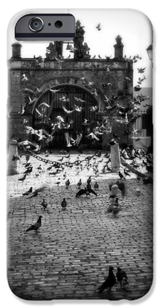 Pigeon iPhone Cases - The Street Pigeons iPhone Case by Perry Webster