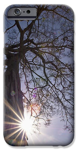 The Sunlight Shines Behind A Tree Trunk iPhone Case by David DuChemin