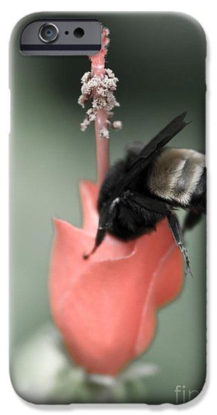 The Sweet Spot iPhone Case by Charles Dobbs