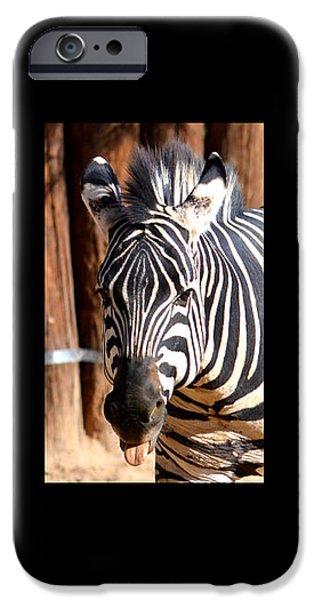 The Three Zebras black borders iPhone Case by Rebecca Margraf
