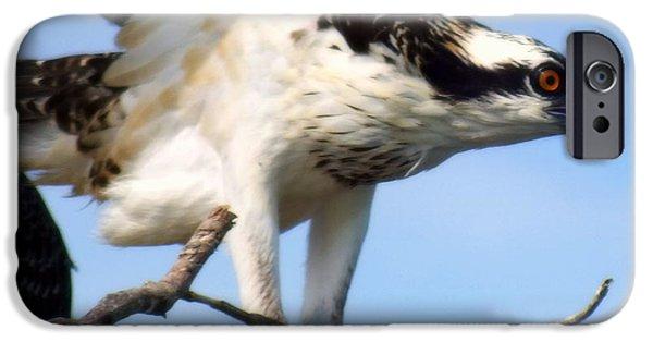 Sea Birds iPhone Cases - The True Fisherman iPhone Case by Karen Wiles