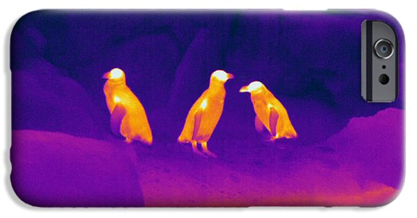 Electromagnetic Spectrum iPhone Cases - Thermogram Of Penguins iPhone Case by Ted Kinsman
