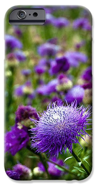 Thistle Field iPhone Case by Tamyra Ayles