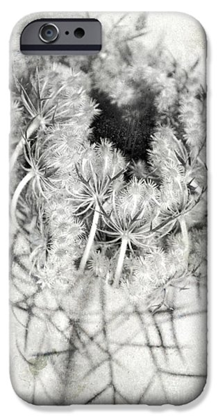Thistle iPhone Cases - Thistle iPhone Case by HD Connelly