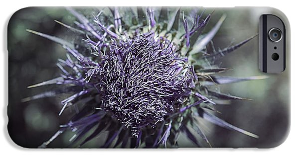Thistle iPhone Cases - Thistle iPhone Case by Joana Kruse