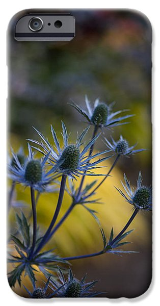 Thistle iPhone Cases - Thistles Abstract iPhone Case by Mike Reid