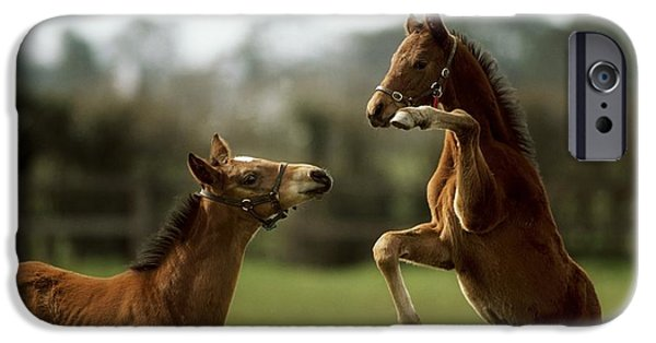 The Horse iPhone Cases - Thoroughbred Foals Playing iPhone Case by The Irish Image Collection