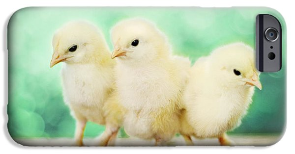 Baby Bird iPhone Cases - Three Amigos iPhone Case by Amy Tyler