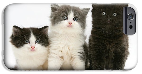 Housecat iPhone Cases - Three Cute Kittens iPhone Case by Mark Taylor