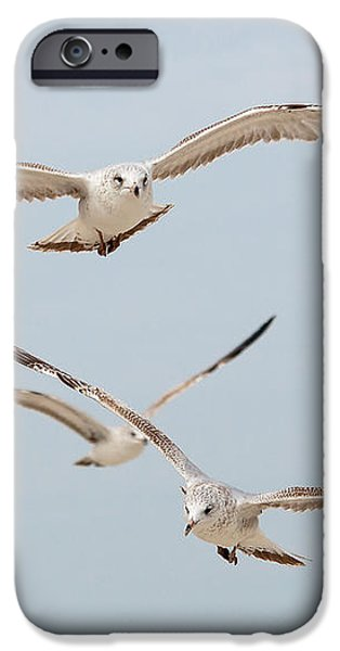 Three Gulls iPhone Case by Kenneth Albin
