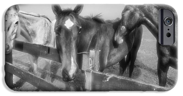 Barn Poster Photographs iPhone Cases - Three Musketeers iPhone Case by Debra and Dave Vanderlaan