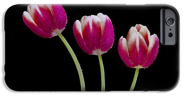 Plants Photographs iPhone Cases - Three Of A kind iPhone Case by Susan Candelario