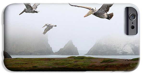 Sausalito iPhone Cases - Three Pelicans iPhone Case by Wingsdomain Art and Photography