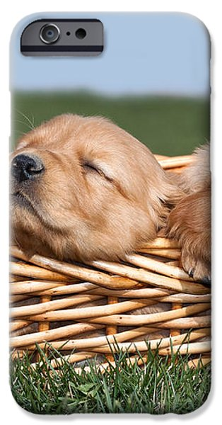 Three Sleeping Puppy Dogs in Basket iPhone Case by Cindy Singleton