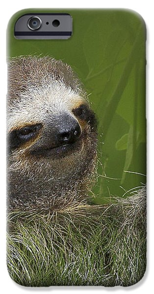 Three-Toed Sloth iPhone Case by Heiko Koehrer-Wagner