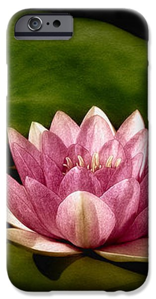 Three Water Lilies iPhone Case by Susan Candelario