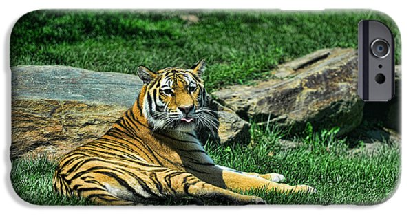 The Tiger iPhone Cases - Tiger - Endangered - lying down - tongue out iPhone Case by Paul Ward