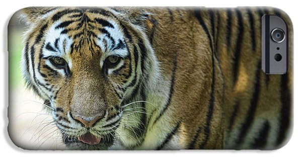 Eye Of The Tiger iPhone Cases - Tiger - Endangered - Wildlife Rescue iPhone Case by Paul Ward