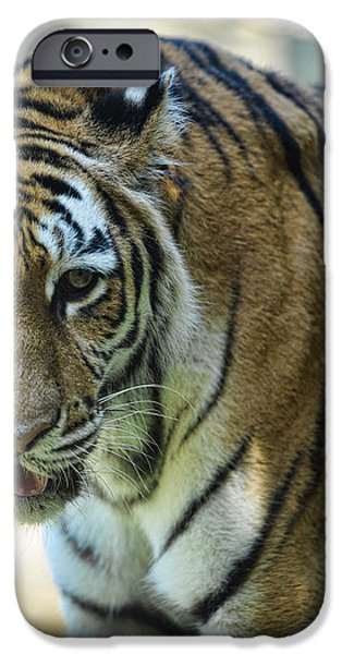 Tiger - Endangered - Wildlife Rescue iPhone Case by Paul Ward