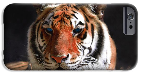 The Tiger iPhone Cases - Tiger Blue Eyes iPhone Case by Rebecca Margraf