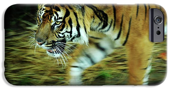 Smithsonian Photographs iPhone Cases - Tiger Burning Bright iPhone Case by Rebecca Sherman