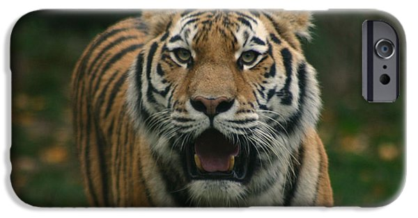 Large Cats iPhone Cases - Tiger iPhone Case by David Rucker