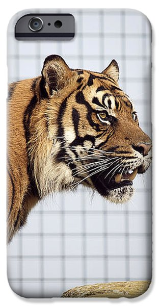 Tiger In Captivity iPhone Case by Linda Wright