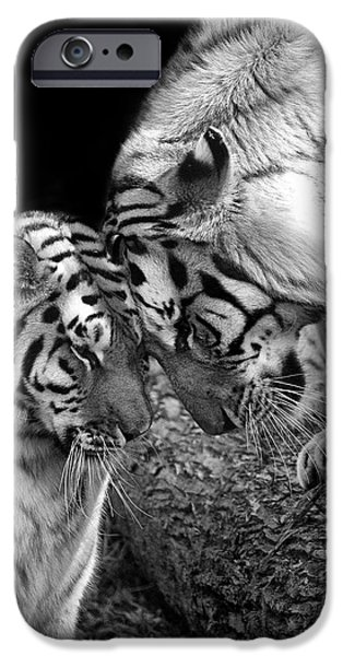 Monotone iPhone Cases - Tiger Love iPhone Case by Stephanie McDowell