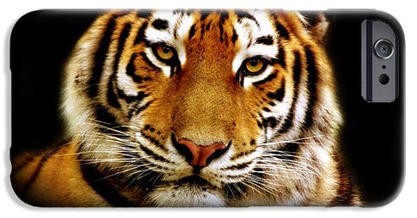 Wildlife Photographs iPhone Cases - Tiger iPhone Case by Photodream Art