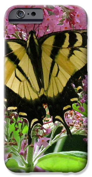 Tiger Swallowtail Butterfly iPhone Case by Randi Shenkman