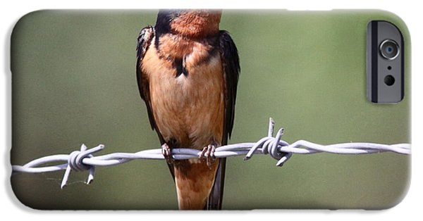 Barn Swallow iPhone Cases - Tightwire iPhone Case by Travis Truelove
