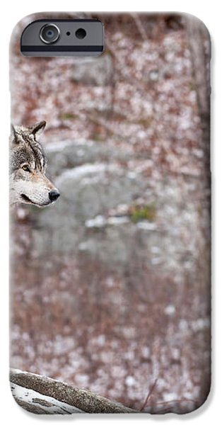 Timber Wolf On Rocks iPhone Case by Michael Cummings