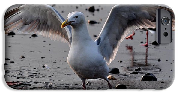 Seagull iPhone Cases - Timeless Wings iPhone Case by Debra  Miller