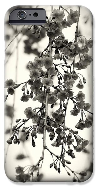 Cherry Blossoms iPhone Cases - Tiny Buds And Blooms iPhone Case by Angie Tirado