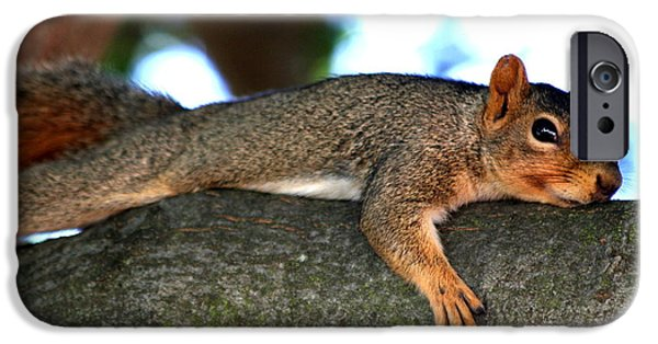 Groundhog iPhone Cases - Tired Old Squirrel . R6622 iPhone Case by Wingsdomain Art and Photography