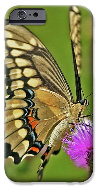 Titan on wings... iPhone Case by Nina Stavlund