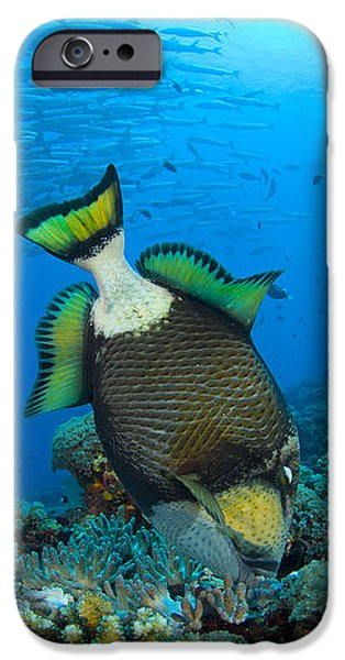 Titan Triggerfish Picking At Coral iPhone Case by Steve Jones