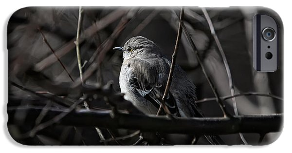 Mockingbird iPhone Cases - To Kill A Mockingbird iPhone Case by Lois Bryan