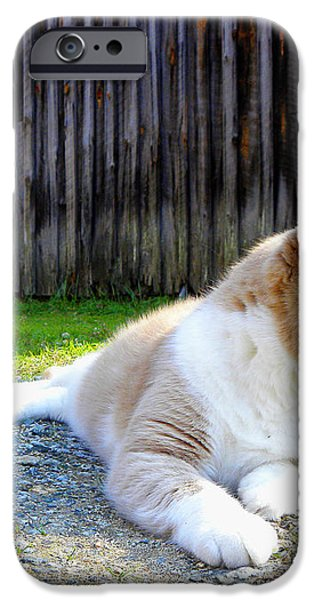 Toby Old Mill Cat iPhone Case by Sandi OReilly