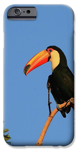 Toucan iPhone Cases - Toco Toucan iPhone Case by Bruce J Robinson