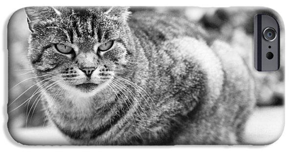 Felis iPhone Cases - Tomcat iPhone Case by Frank Tschakert