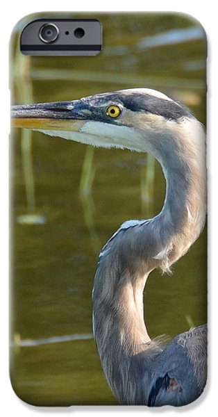 Too Close For Comfort iPhone Case by Carol  Bradley