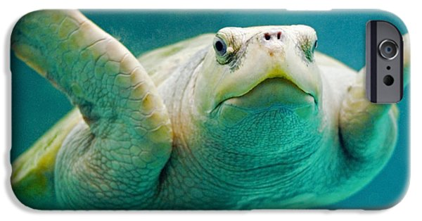 Reptiles iPhone Cases - Tortuga Sonrisa iPhone Case by Skip Hunt