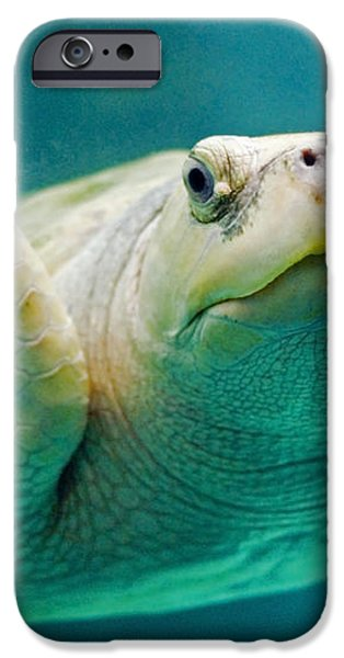 Tortuga Sonrisa iPhone Case by Skip Hunt